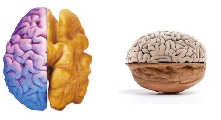 الجوز-الدماغ